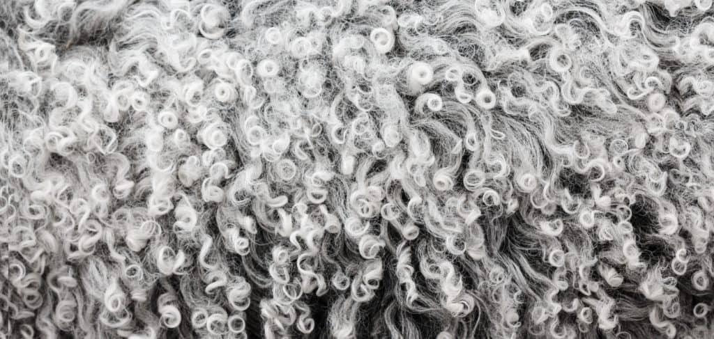lanolin from sheep's wool